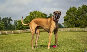 Do Dog Sizes Affect Lifespan