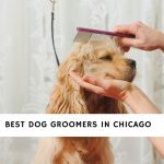 Dog Groomers in Chicago