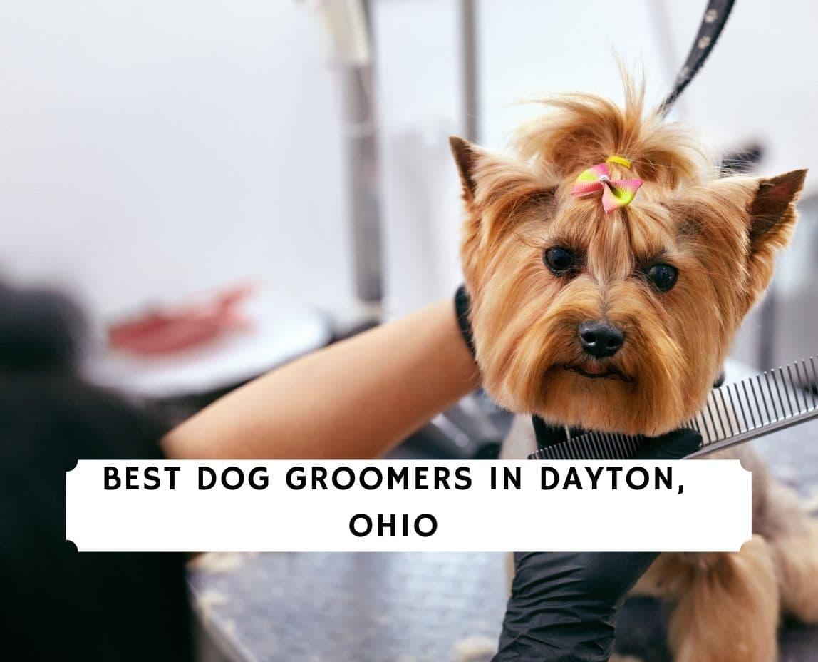 Dog Groomers in Dayton Ohio