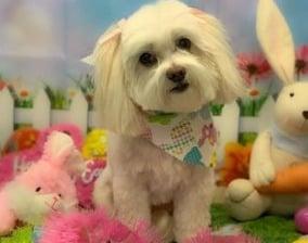 Doggie Styles Day Spa