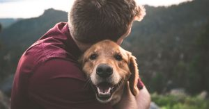 Emotional Attachment in Dogs and Humans