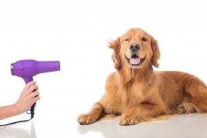 Factors that Influence Grooming Time