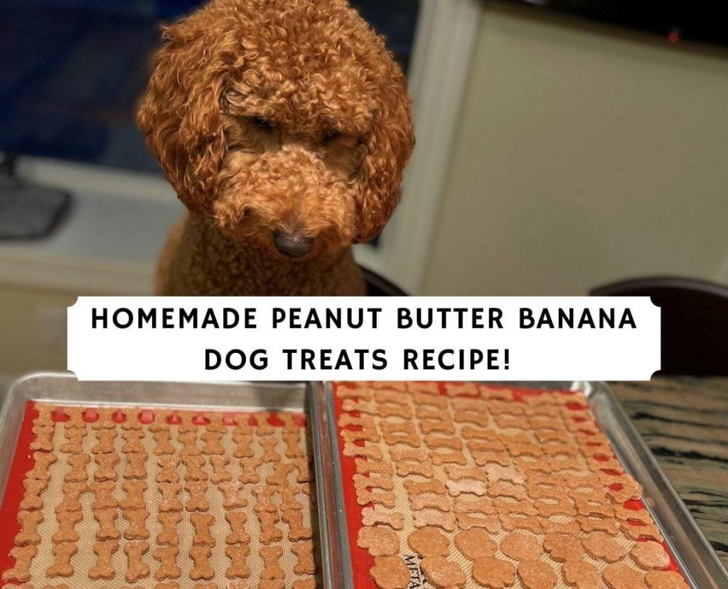 Homemade Peanut Butter Banana Dog Treats Recipe!