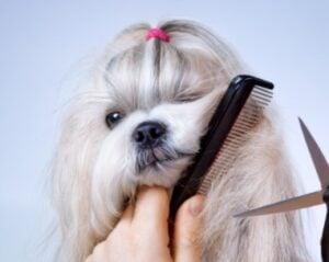 How Long Does Dog Grooming Take FAQ