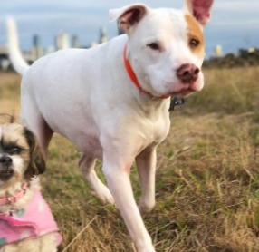Local Shelters For Dogs