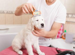 How Much Should You Tip Dog Groomers?
