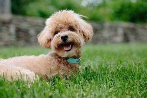 What Does Non-Shedding Really Mean
