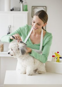 Conclusion For Do Groomers Sedate Dogs