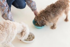 The Difference Between Spot & Tango Fresh Vs. UnKibble