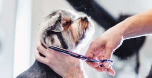 Reasons Why You Should Tip Your Dog Groomer