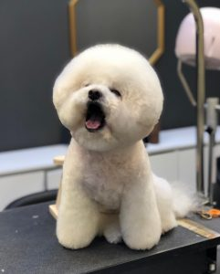 Conclusion For Do You Tip Dog Groomers
