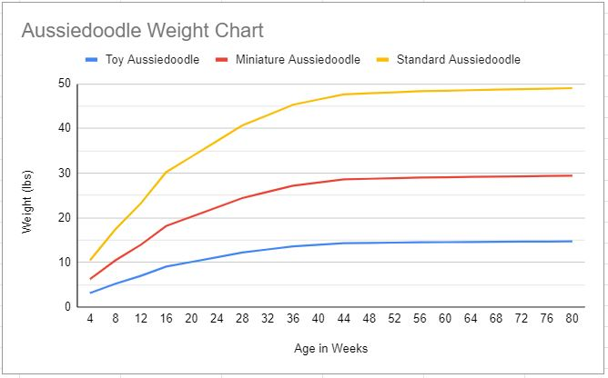 aussiedoodle growth chart