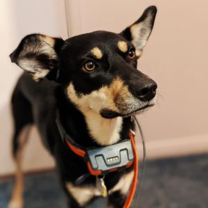 best dog tracker without subscription