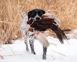 best hunting dog training collar