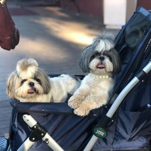 best stroller for baby and dog