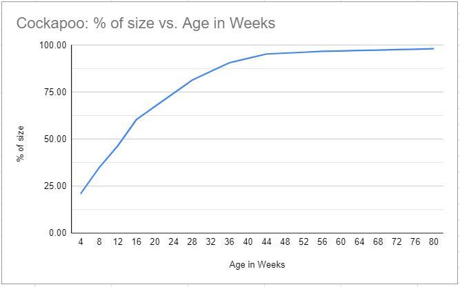 cockapoo size chart