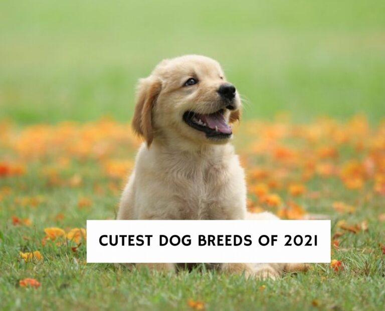 Cutest Dog Breeds of 2021