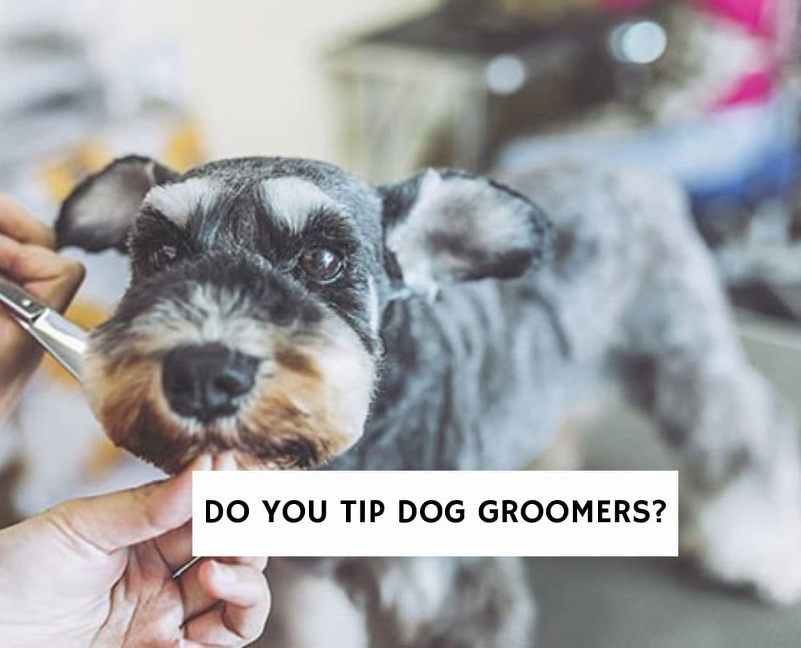 Do You Tip Dog Groomers?