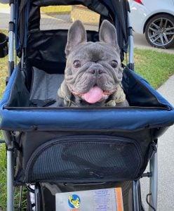 dog baby stroller