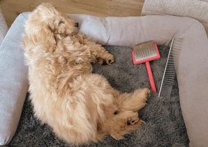 dog grooming slicker brush