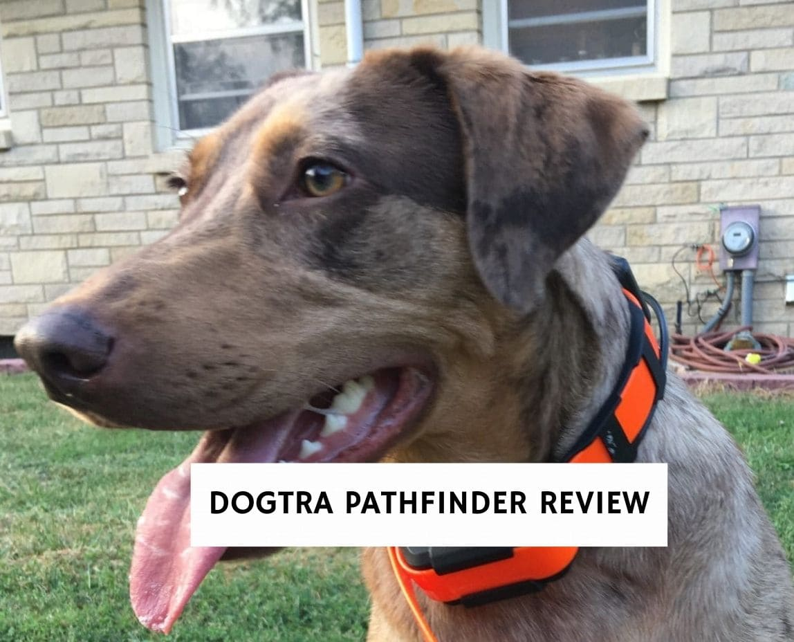 Dogtra Pathfinder Review