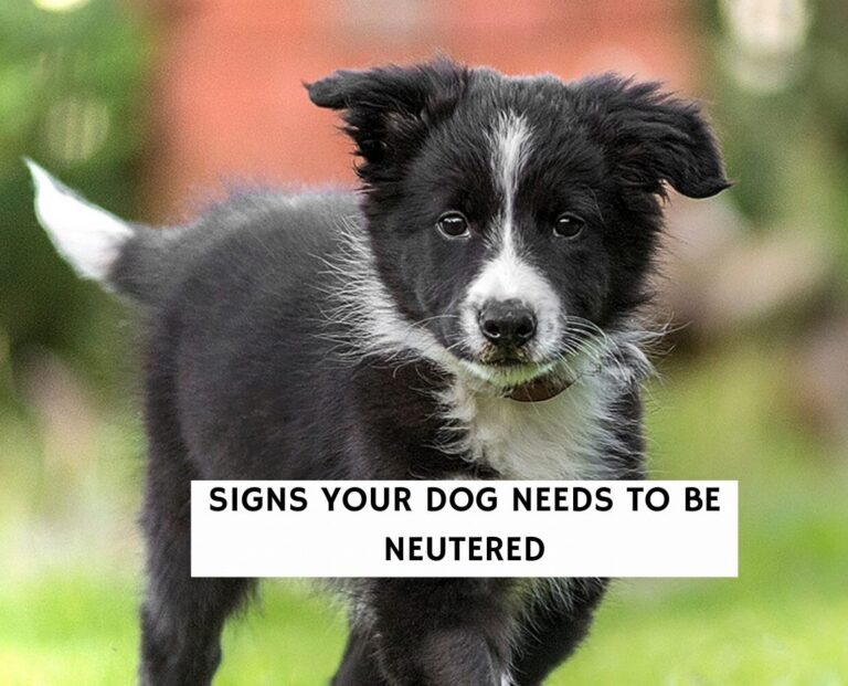 Signs Your Dog Needs to Be Neutered