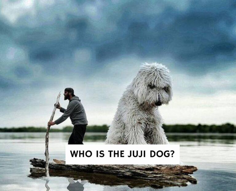 Who Is The Juji Dog