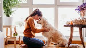 Reasons Why Your Dog Licks
