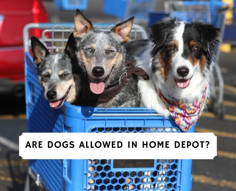 Are Dogs Allowed in Home Depot