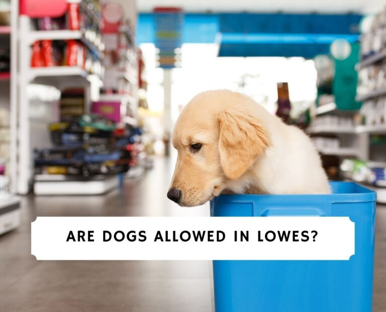 Are Dogs Allowed in Lowes