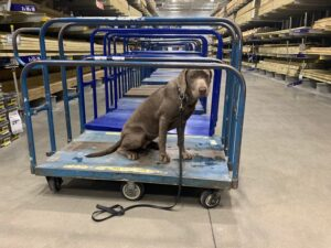 Conclusion For Are Dogs Allowed in Lowes