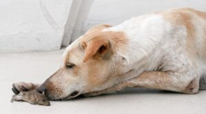 Are Mice Bad For Dogs?