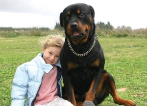 Are Rottweilers Really That Dangerous?