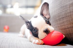 Are Sponges Bad for Dogs?