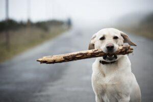 Be Careful With Sticks