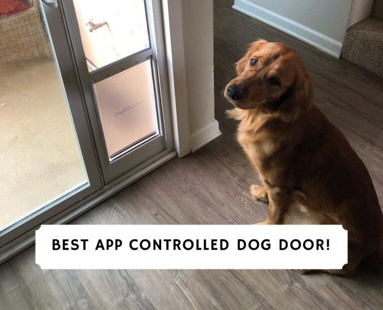 Best App Controlled Dog Door