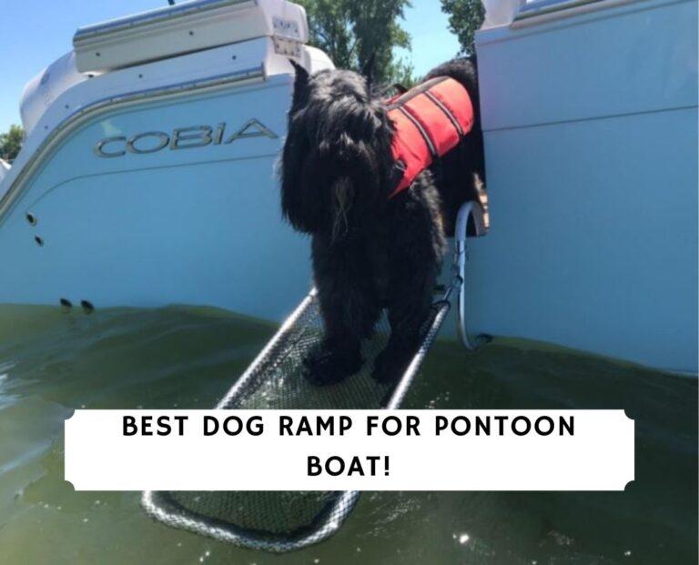 Best Dog Ramp for Pontoon Boat