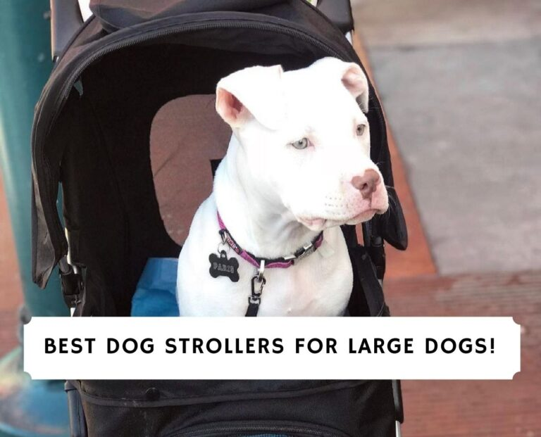 Best Dog Strollers for Large Dogs
