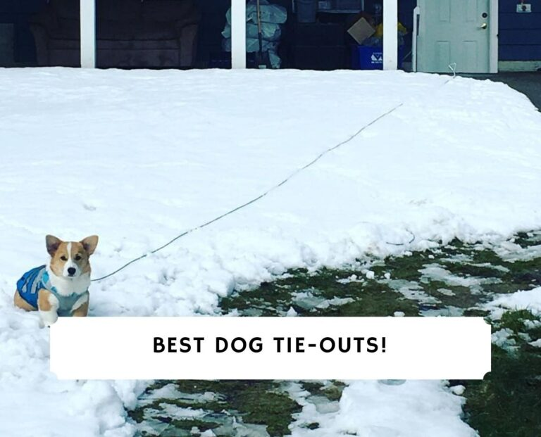 Best Dog Tie-Outs