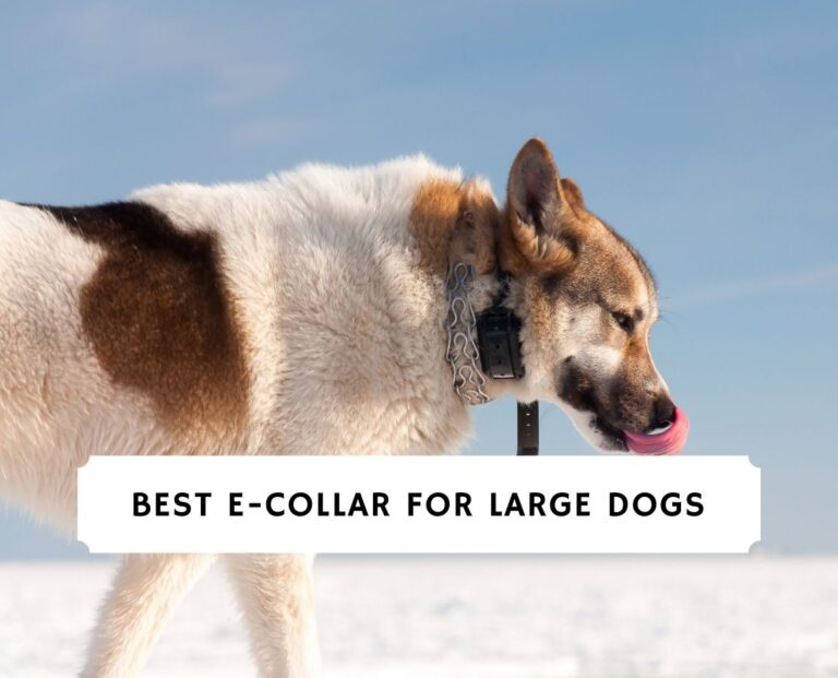 Best E-Collar for Large Dogs