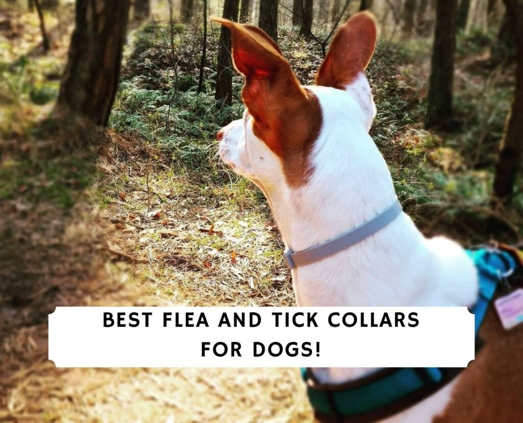 Best Flea and Tick Collars for Dogs