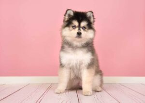 Conclusion For The Best Hypoallergenic Dog Mixes
