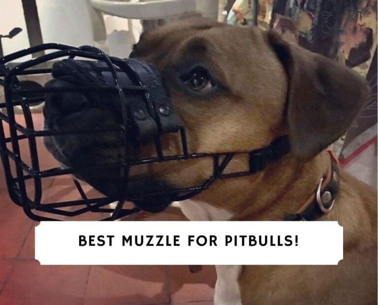 Best Muzzle for Pitbulls