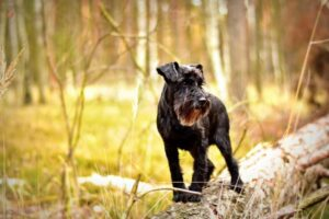 Conclusion For The Best Rat Hunting Dogs