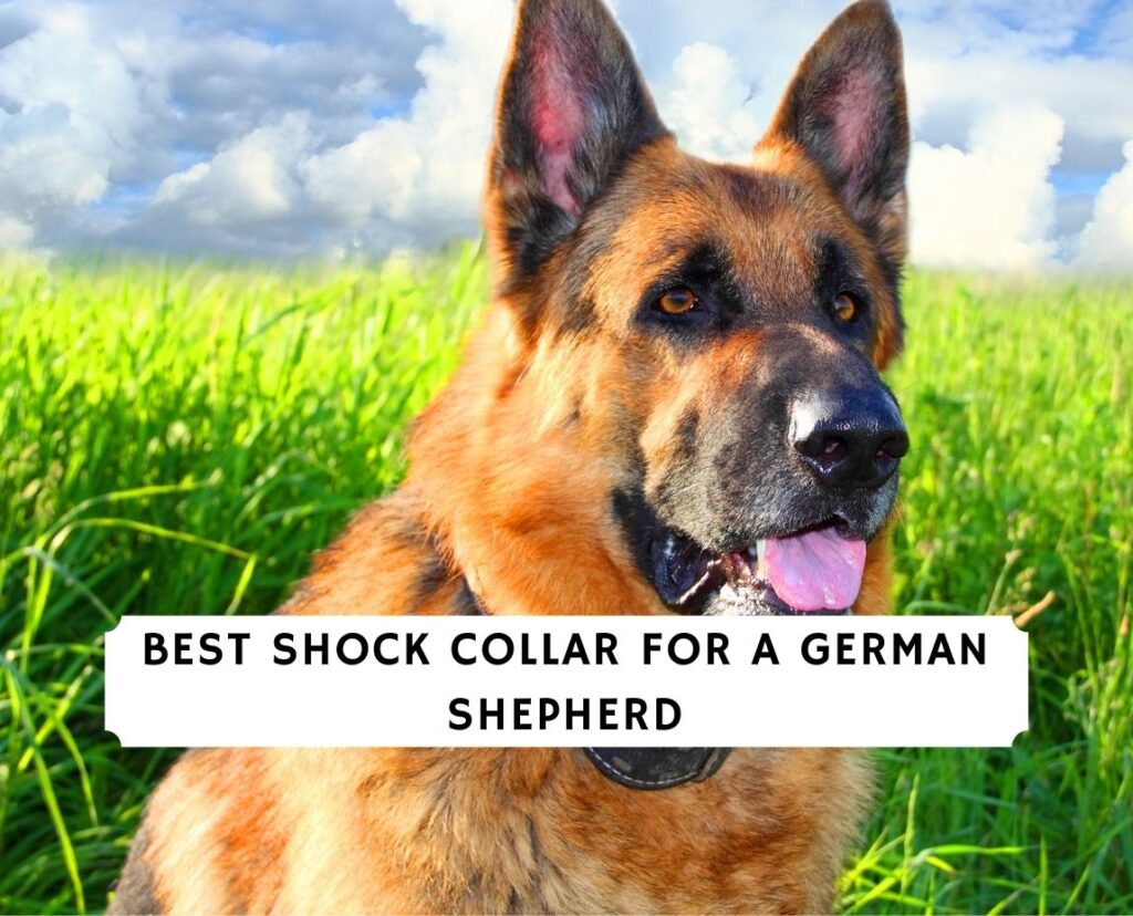 Best Shock Collar for a German Shepherd
