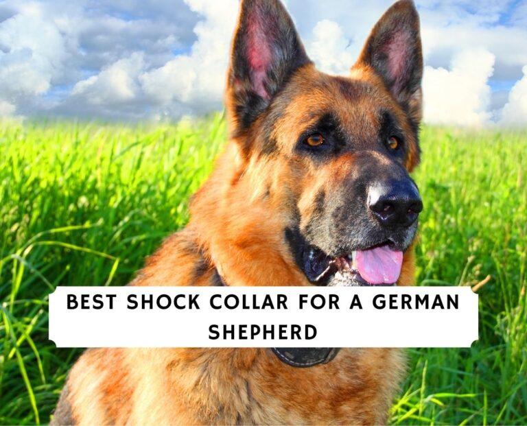 Best Shock Collar for a German Shepherd