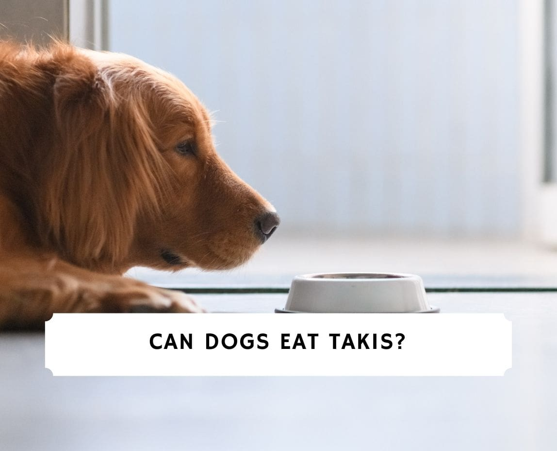 Can Dogs Eat Takis