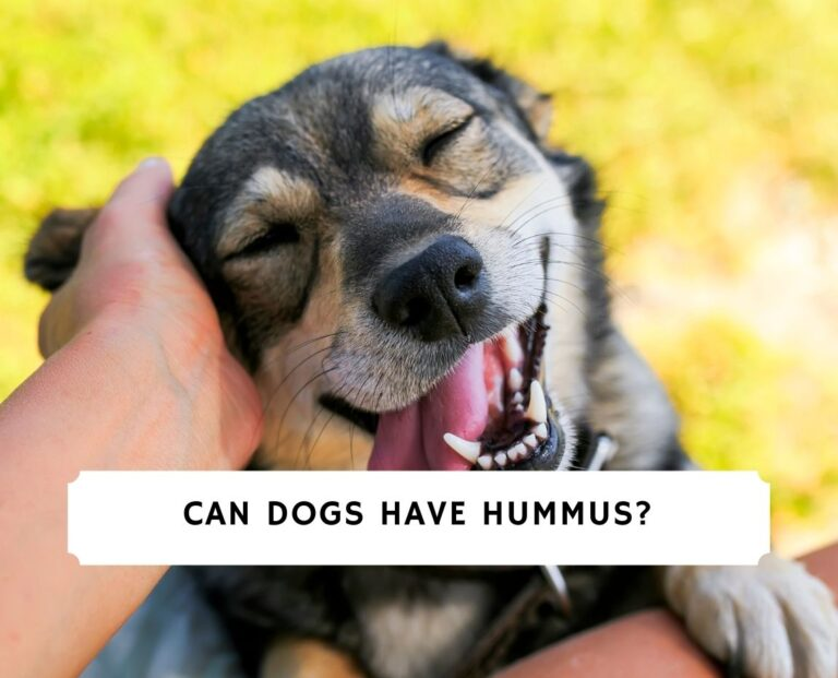 Can Dogs Have Hummus
