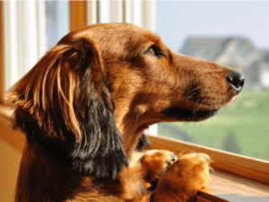 Care For Your Dog and Their Health