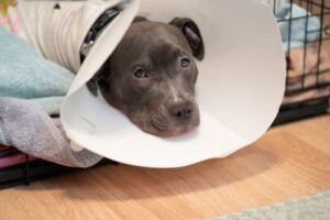Care for Your Dog Following Neutering